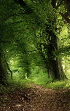 Forest Path, Tree Forest, Forest Scenery, All Nature, Amazing Nature, Beautiful Forest, Beautiful Places, Landscape Photography, Nature Photography
