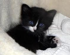 So cute. Happy Caturday Saturday. Signing off for tonight. Have fun pinning. Thewitchescircle