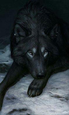 Loup Noir Splendide <3