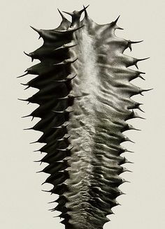 Peter Lippmann :: photographer :: Cactus 1
