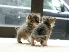 I don't like cats, but this is preshhh!!