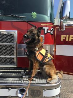 A training collar can become a very efficient tool to teach your dog the right behaviors. It is important to select the right kind of training collar for your dog and to learn how to properly use it. Training Collar, Fire Trucks, Your Dog, Teaching, Firefighters, Dogs, Animals, Animales, Animaux