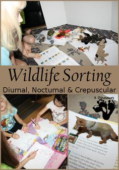 Wildlife Sorting: Diurnal, Nocturnal & Crepuscular Based on Book, Daylight Starlight by Wendell Minor (from 3 Dinsoaurs)