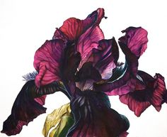Gallery of Rosie Sanders' original botanical flower paintings