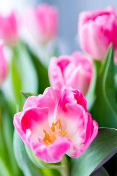 pink flowers | härligt hemma.
