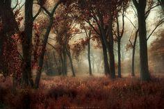 Autumn Mist by Michael Huber