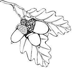 Template for Leaves and Acorns | Oak Leaf And Acorn Template Oak ...