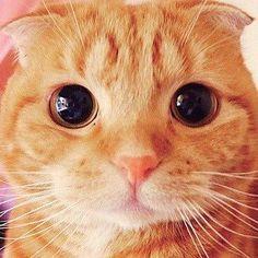 Muta, o 'Gato de Botas' da vida real. - Capinaremos
