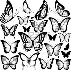 butterflies black silhouettes isolated on white background photo