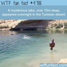 Wow Facts, Wtf Fun Facts, True Facts, Funny Facts, Random Facts, Random Stuff, Did You Know Facts, Things To Know, Unbelievable Facts