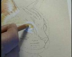 How to Draw Cat's Eye and Ear