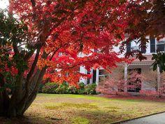 fall foliag Boston Ma 2013   Where to See New England's Best Fall Foliage   Viator