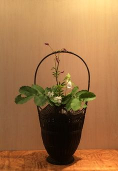 Oriental Flowers, Japanese Flowers, Arte Floral, Nihon, Tea Ceremony, Wabi Sabi, Ikebana, Bonsai, Flower Arrangements