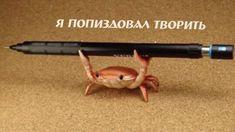 One Writer's Corner Memes Estúpidos, Stupid Memes, Cat Memes, Jokes, Reaction Pictures, Funny Pictures, Russian Memes, Mood Pics, Meme Faces