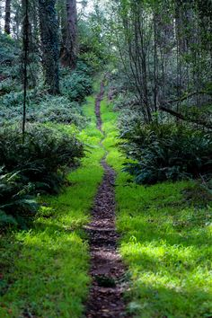 """""""Perfect Path Through Grass, Ferns and Firs (Point Reyes, California - 2/2015) """""""