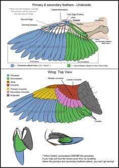 Bird Wings (Tutorial) by Key-Feathers on @DeviantArt