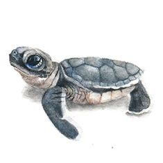 11 December 2014 – Paintings for Ants Sea Turtle Painting, Sea Turtle Art, Turtle Love, Mini Tattoos, Body Art Tattoos, Turtle Tattoo Designs, Watercolor Tips, Baby Turtles, December 2014