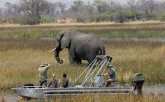 Boating up the Selinda spill way Okavango Delta, Boating, Safari, To Go, Elephant, Africa, Animals, Animales, Animaux