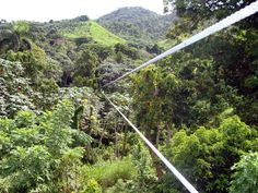 """Zip Lining in Punta Cana, DR - It was HOT, the hiking from platform to platform was exhausting but it made the rush of the """"zip"""" feel that much better. It was so thrilling!"""