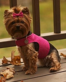 Christmas Present for Daisy!    Tutorial: Make a dog harness. Used to make for Gucci, use coordinating colors & make reversible.
