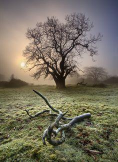 Foggy Morning by Gary McParland, via 500px (taken in Ireland)