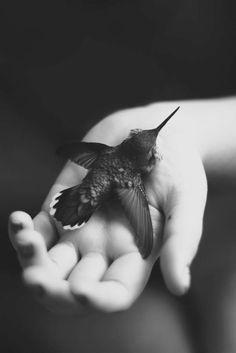 Hummingbird animal totem is a messenger of hope and jubilation. Black White Photos, Black N White, Black And White Photography, Photo Black, Black Velvet, Love Birds, Beautiful Birds, Beautiful Life, Animal Totems