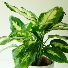 """Las plantas deinterior vuelven nuestros hogares acogedores ysiempre alegran lavista. Sin embargo, nocualquier persona tiene paciencia ytiempo para transplantar sus """"decoraciones"""" verdes. Nosotros, enGenial.guru, descubrimos que existen plantas que pueden vivir sin tierra. Yaquí están:"""