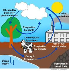 Simple Carbon Cycle Steps on Water Cycle Powerpoint