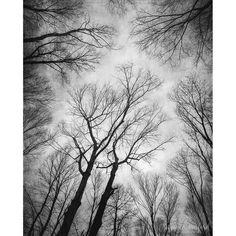 "Landscape Photography, Black and White Trees Photograph, woodland, forest, nature, gray, sky, branches, 8x10 - 24x30, ""Vertigo 1"""