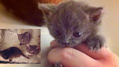3 Abandoned Kittens Given a Second Chance, Now They Can't Stop the Love! - Love Meow