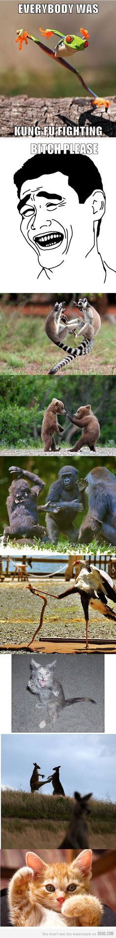 Everybody loves kung fu fighting!