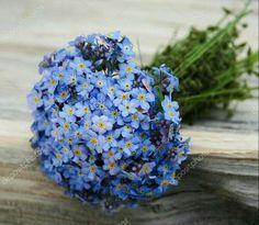 Skylar's 'forget me not' Blue bouquet Little Flowers, Blue Flowers, Beautiful Flowers, Water Flowers, Forget Me Nots Flowers, Blue Bouquet, Blue Garden, Flower Aesthetic, Gerbera