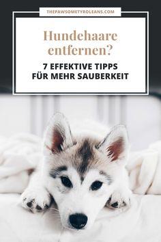 Wie entferne ich Hundehaare am besten, Hundehaare von Couch, Kleidung, Auto und Teppich entfernen, Hundehaarentferner, Tipps und Tricks, Ratgeber, Hundeblogger Österreich, www.thepawsometyroleans.com