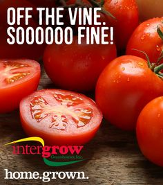 Fresh tomato recipes from Intergrow in Albion NY! Fresh Tomato Recipes, Artisan, Vegetables, Food, Essen, Craftsman, Vegetable Recipes, Meals, Yemek