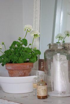 (O))) Pelargonium
