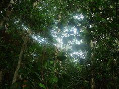 Selva y luz.