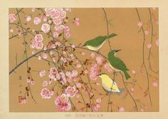 "Birds & Cherry Blossoms | Tattoo Ideas & Inspiration - Japanese Art | Rakuzan (Rakusan) - ""Japanese Bush Warbler"", ca. 1930 