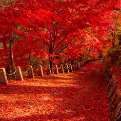 Autumn road 落ち葉の道