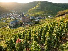 Im Ahrtal liegen malerische Winzerorte eingebettet zwischen sanften Hügeln und schroffen Weinbergen