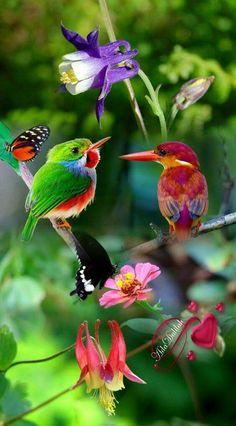 Chirping of birds Funny Birds, Cute Birds, Pretty Birds, Beautiful Creatures, Animals Beautiful, Cute Animals, Exotic Birds, Colorful Birds, Exotic Flowers