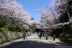 Wanna get out of Kyoto? Just a short trip away is one of Japan's largest temples: Miidera http://zoomingjapan.com/travel/miidera-temple/