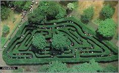 Картинки по запросу кусты которые высаживаю в английских парках