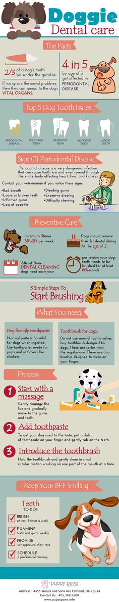 It is important to take care of your dog's dental health and have some basic knowledge on how to prevent any dental issues. This infographic provides the top 5 dog tooth issues along with signs of periodontal disease among dogs.