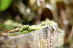 Amp, Nature, Naturaleza, Nature Illustration, Off Grid, Natural