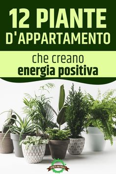 12 plants in feng shui, which bring positive energy into … – Flower Ideas House Plant Care, House Plants, Flower Vases, Flower Arrangements, Green Life, Feng Shui, Better Life, Flower Decorations, Flower Power