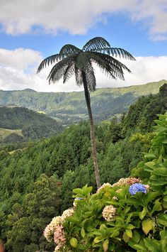 View into the valley of Furnas, Island of Sao Miguel, Azores, Portugal