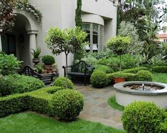 Image result for box trees in planters