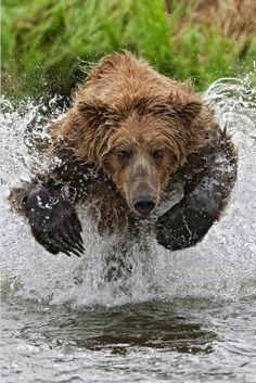 Gay Bear Straight Loins