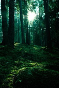 """""""waltz of sunlight and moss"""" by Nathan Wright"""