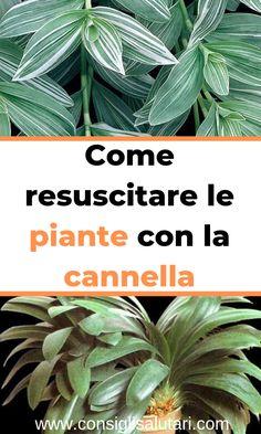 Come resuscitare le piante con la cannella #salutetoservice #perderepeso #vita #grasso Diy Projects For Teens, Diy For Teens, Crafts For Teens, Easy Diy Projects, Easy Crafts, Craft Work, 5 Minute Crafts, Diy Room Decor, Diy Furniture